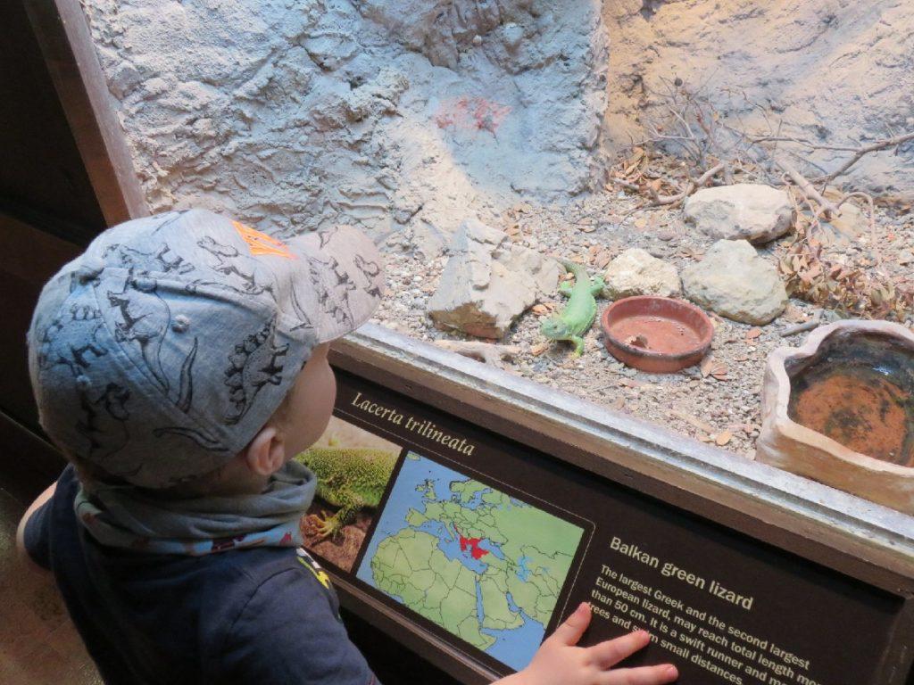 Gecko im Naturhistorischen Museum von Heraklion